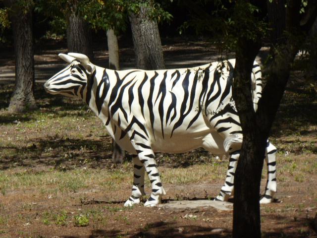 zebra cow2