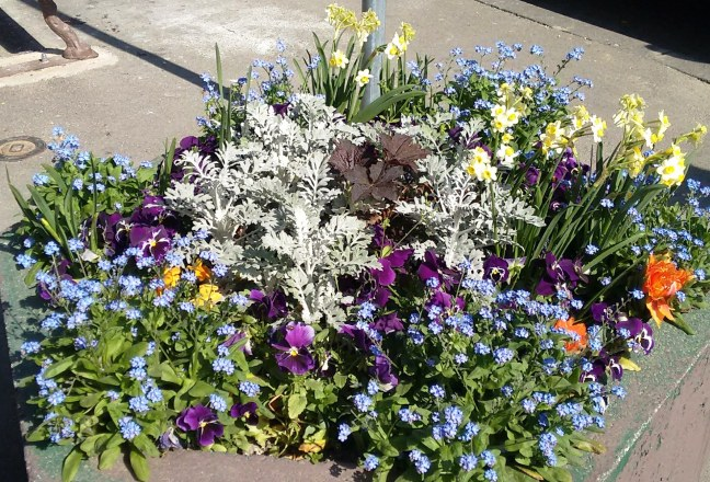 Nothing like a vibrant mix of posies to say spring is here!