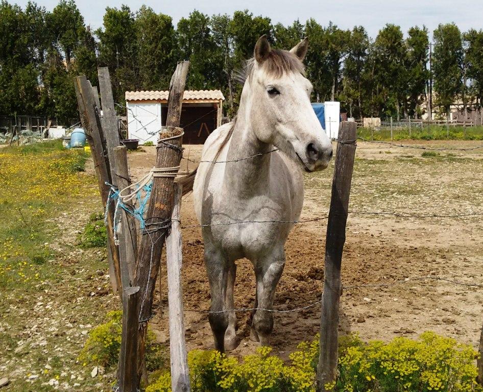 Horse on walk